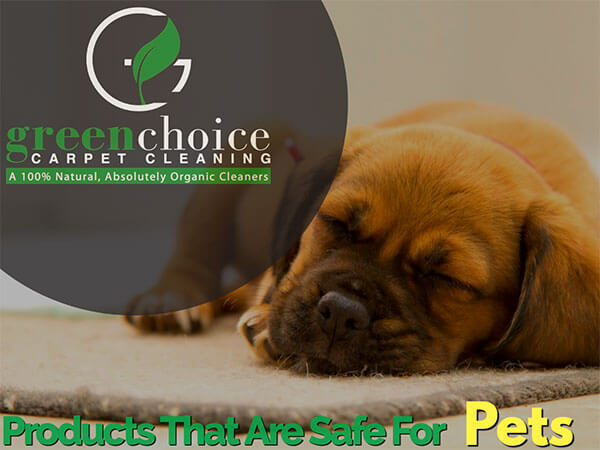 our-product-is-100-organic-dog-safe-pet-safe-in-NYC